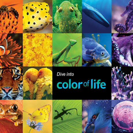 Color of Life Member Evening on June 17