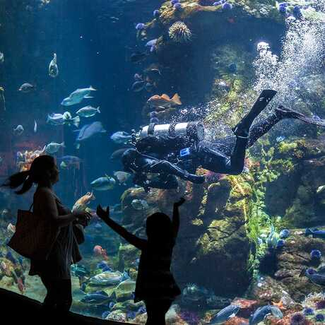 A family gleefully interacts with a diver during a live dive show in the Philippine Coral Reef tank.