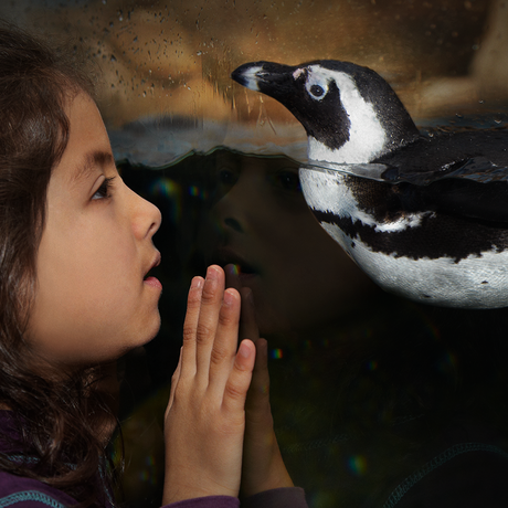 Girl face-to-face with African penguin