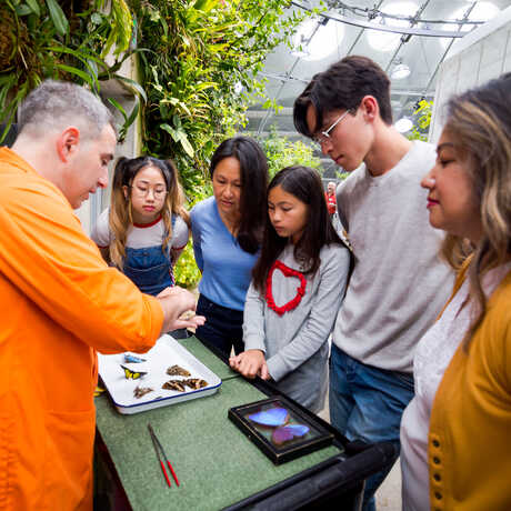 A docent shows butterfly specimens to members in Osher Rainforest