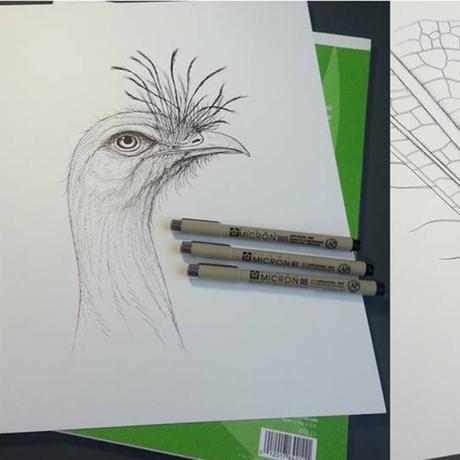 Examples of Scientific Illustrations