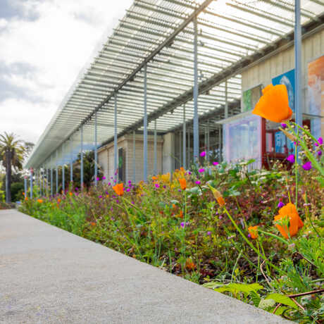 Angled exterior photo of Academy facade with orange poppies in the garden. Photo © Gayle Laird