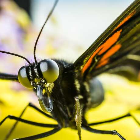 Close-up of butterfly head