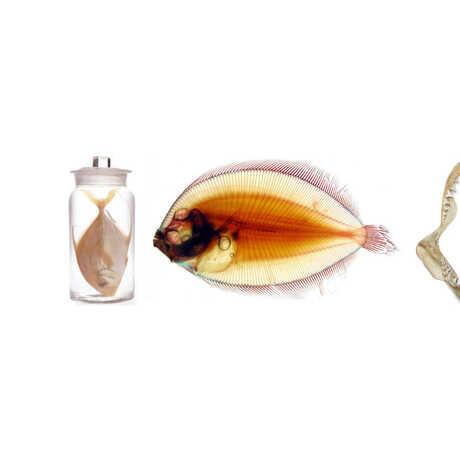 picture of fish specimens