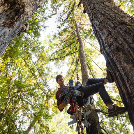 Topher White installing a solar-powered listening device in the forest canopy