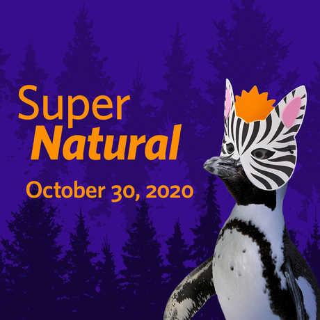SuperNatural banner image featuring penguin wearing a zebra mask