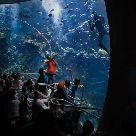 A diver gives a presentation from inside the aquarium tank