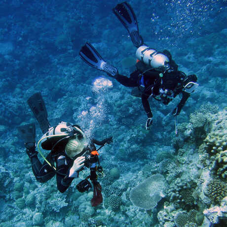 Two Academy scientists dive beside a large coral reef formation