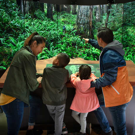 Family inside redwood ascent interactive in Giants of Land and Sea exhibit
