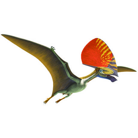 Tupandactylus illustration © AMNH