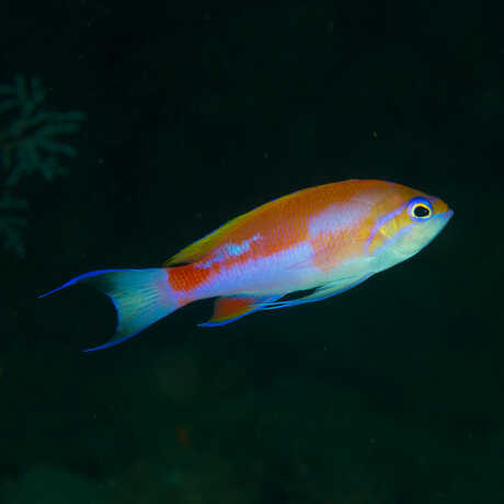Photo of Philippine coral reef fish