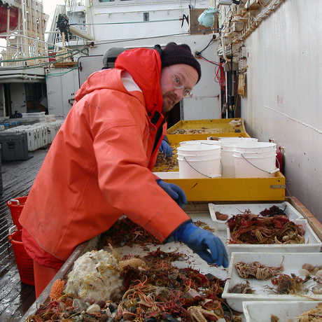 Rich Mooi with sea urchins in Antarctica