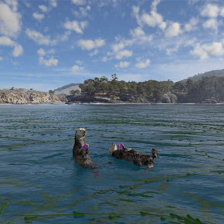 Sea otters in Habitat Earth