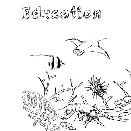 Illustrations from Biodiversity course