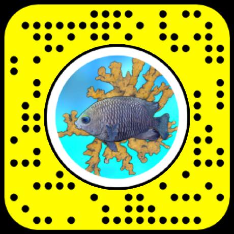 Snapcode for Elkhorn Coral AR lens