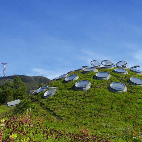 A view of the living roof covered in green grass.