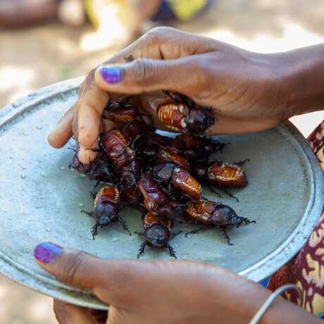 A woman puts a pile of edible insects on a plate in Madagascar