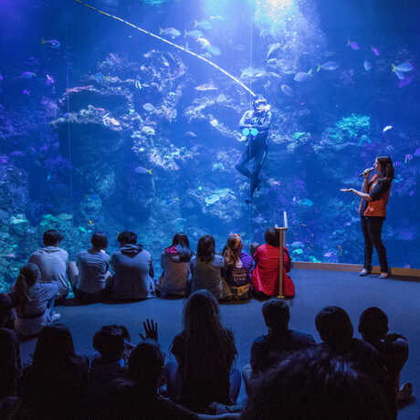 Students watch a dive show in front of the Philippine Coral Reef exhibit