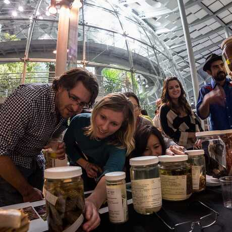 NightLife guests examine specimens in front of the rainforest dome