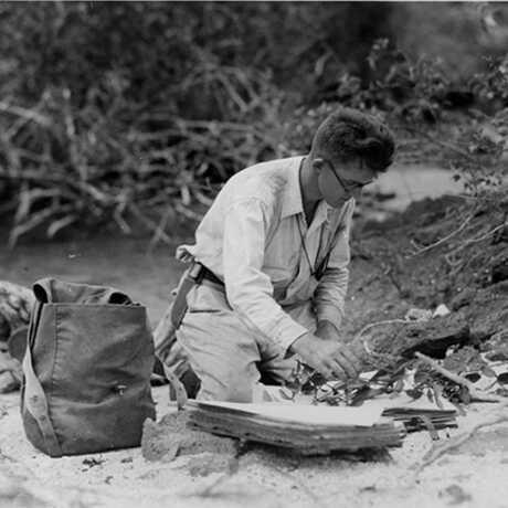 John Howell conducting field work, 1932.