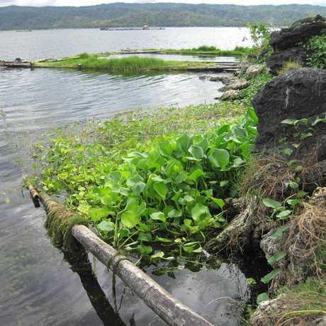 Lake Taal