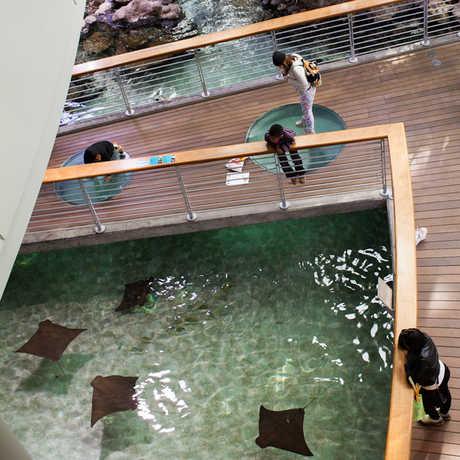 Ray lagoon