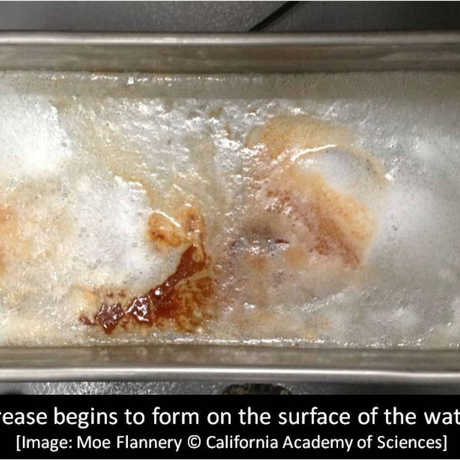 Grease begins to form on the surface of the water