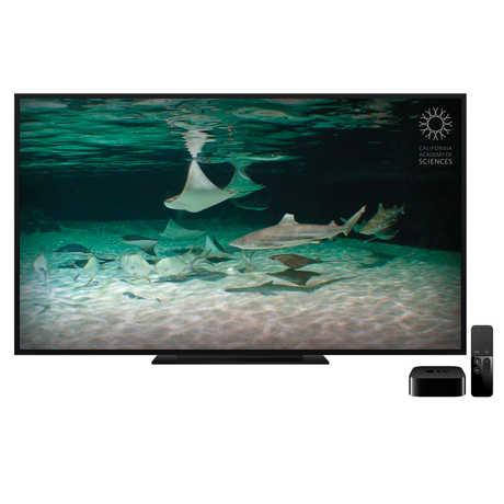 Sharks Live for Apple TV