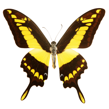 Butterfly logo for The Hive donor level
