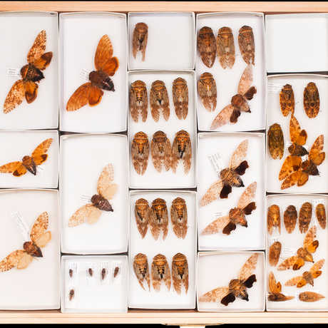 Entomology specimens collected on the Hearst Philippine Biodiversity Expedition