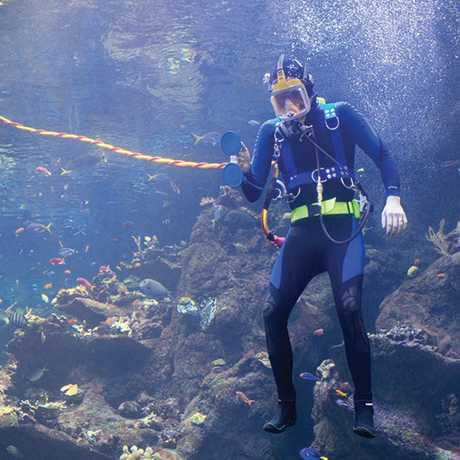 A diver in the Philippine Coral Reef tank