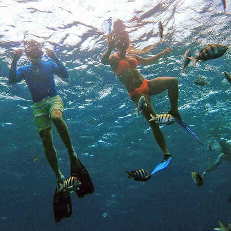 Underwater photo of Domenic and Lauren Narducci snorkeling among tropical fish
