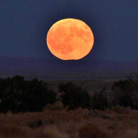 Big orange harvest moon