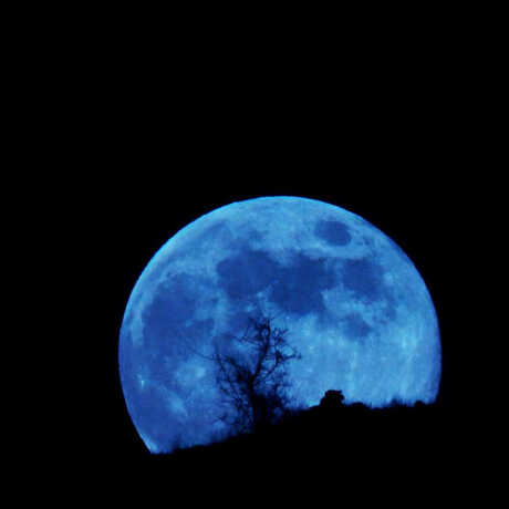 Photo of an eerie blue Moon with silhouette of tree in front