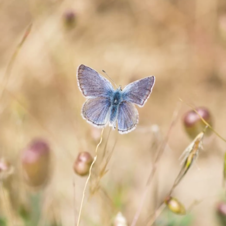 Blue butterfly by Tim Wong