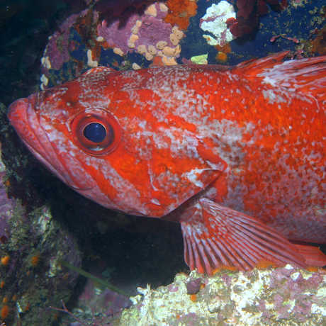 a rockfish perched on a rock
