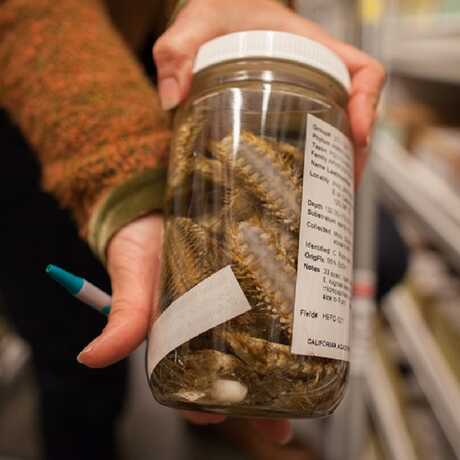A volunteer holds up a jar full of preserved specimens.