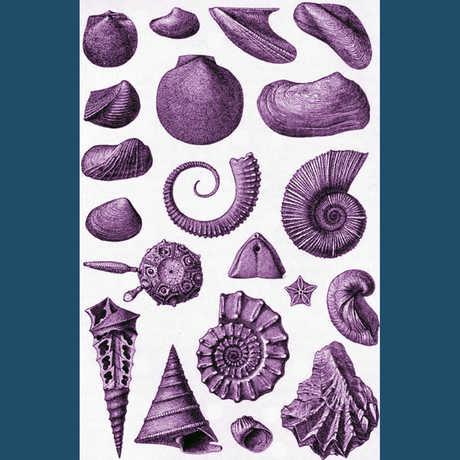 invert fossils
