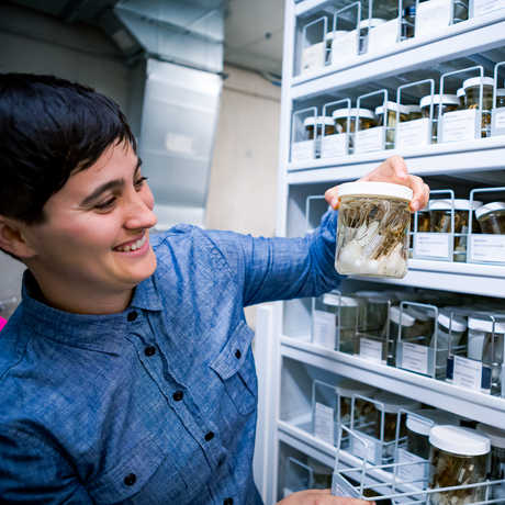 Dr. Lauren Esposito looks at a specimen in a jar