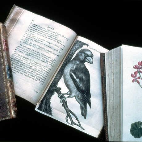 Image of rare books