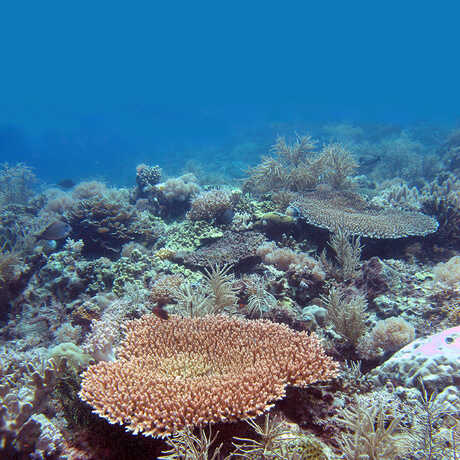 Lubang coral reef in the Philippines.