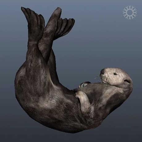Image of sea otter illustration