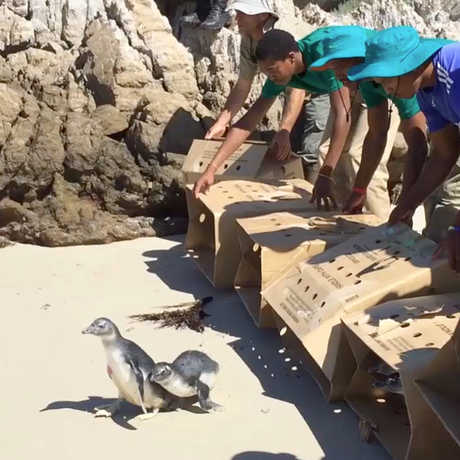 Photo of penguin release