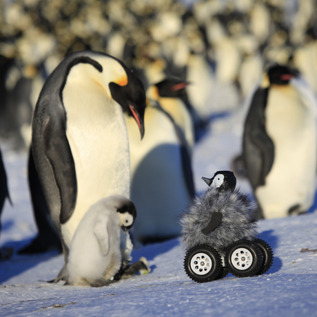 Photo of penguins and rover