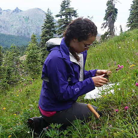 Curator Sarah Jacobs studies wildflowers on a mountain slope