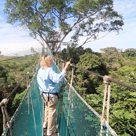 Meg Lowman in the Canopy