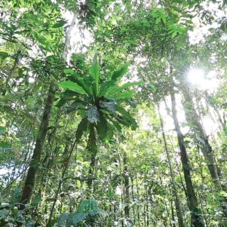 Amazon rainforest, Peru