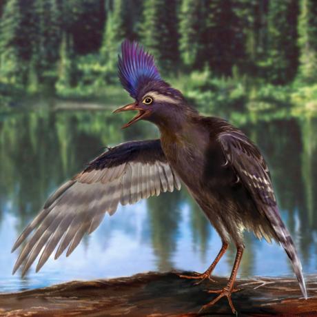 A reconstruction of the oldest ornithuromorph, Archaeornithura meemannae