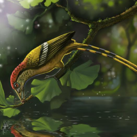 Reconstruction of the Cretaceous fossil bird from the Araripe Basin, Brazil
