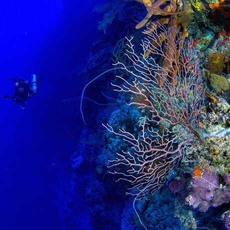 Underwater photo of diver exploring Twilight Zone coral reef